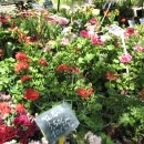 Market flowers for planting