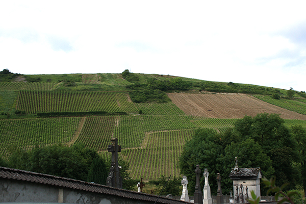the hills of Chavignol
