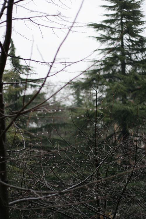 Rain in Udine
