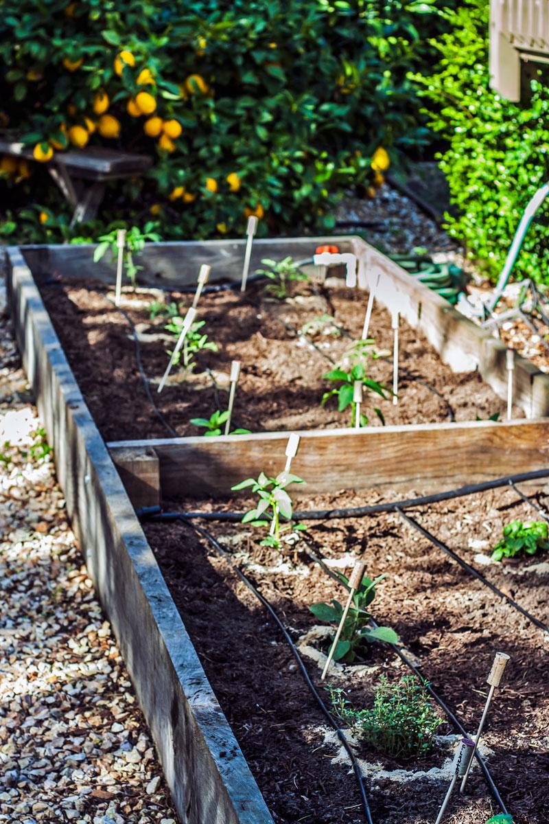 tomato-garden-007