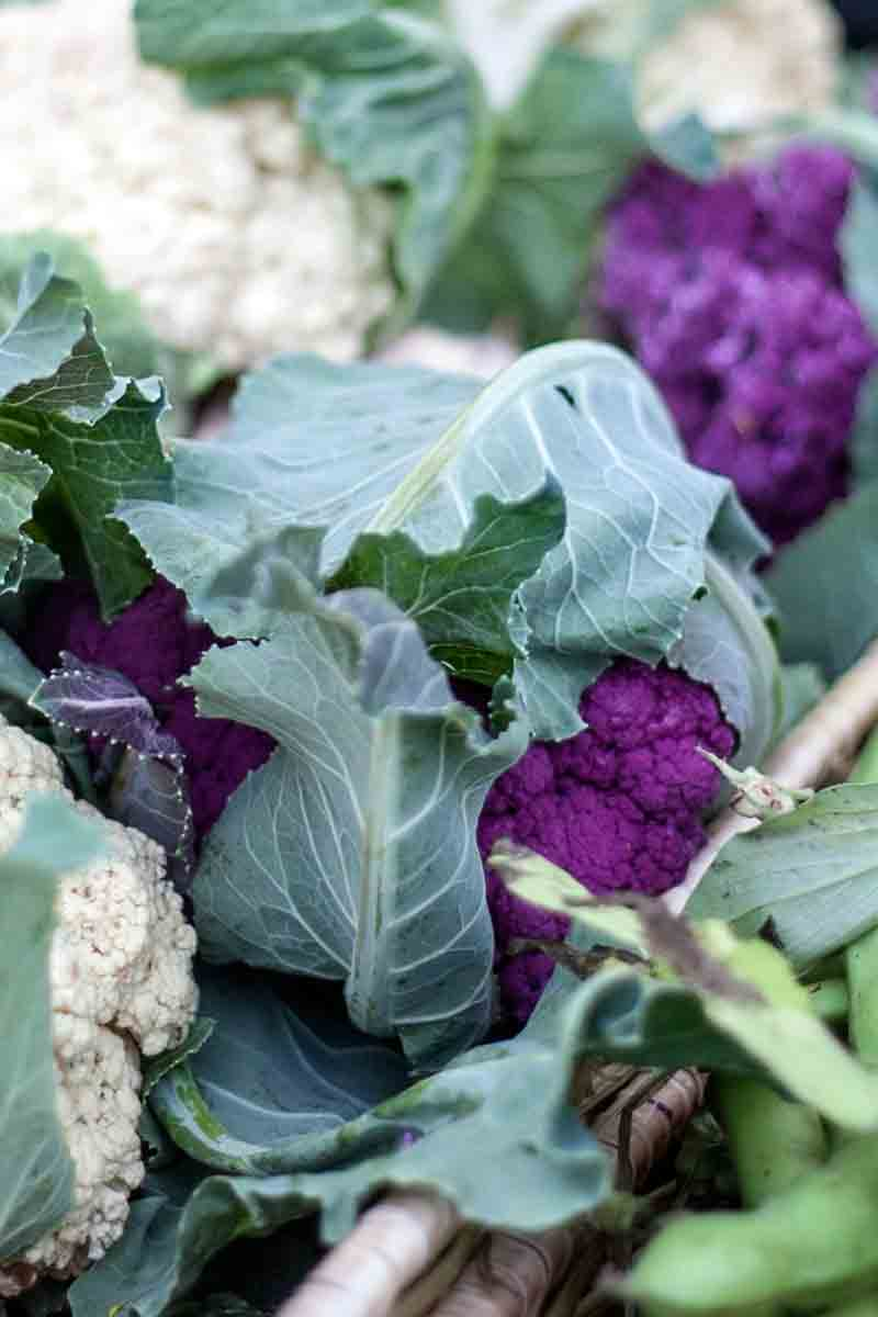 Napa-Farmers-Market_purple cauliflower
