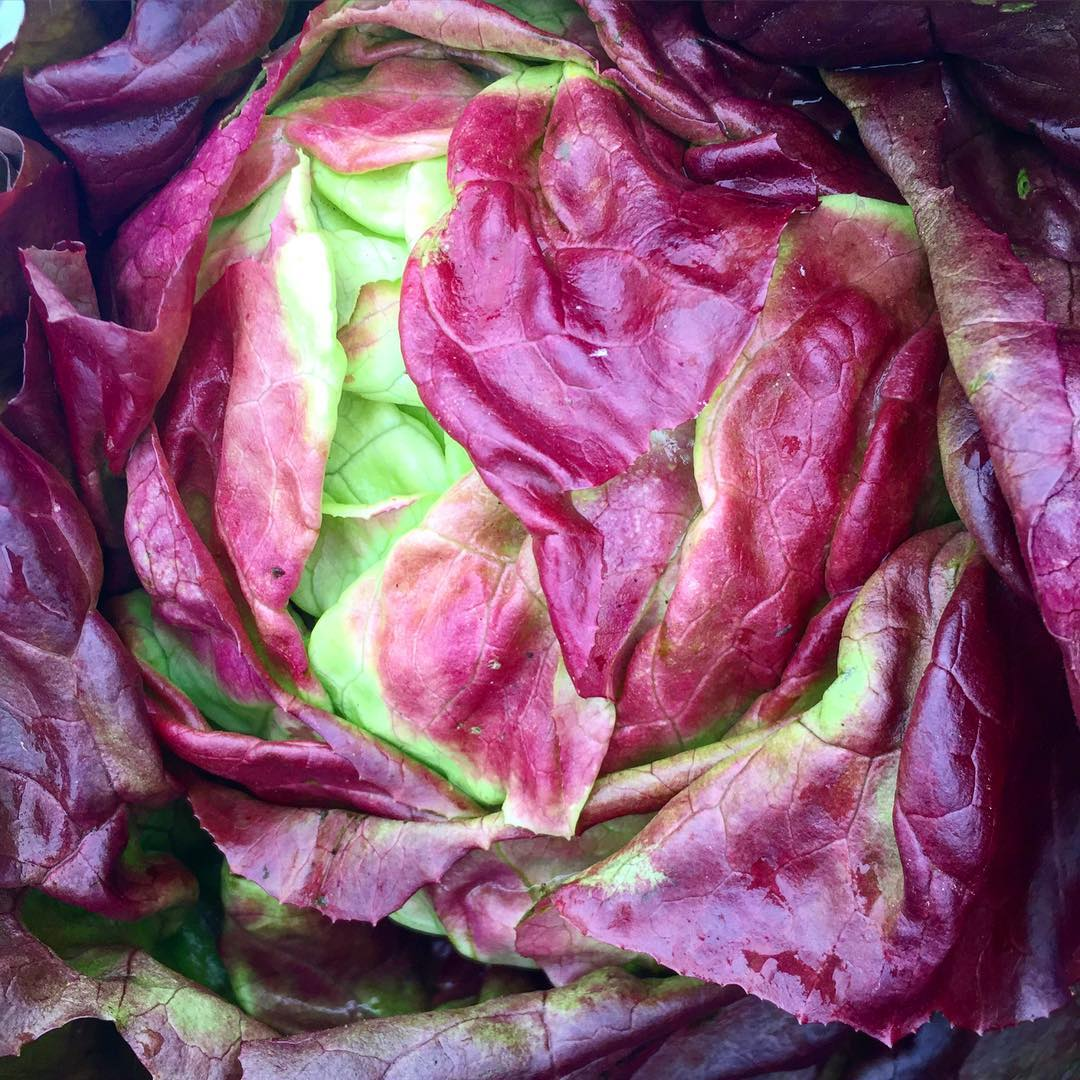 napa-farmers-market_big-ranch-farms_lettuce
